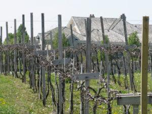Illinois wineries