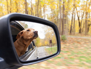Pet travel safety | Hong Kong Auto Service Wilmette IL